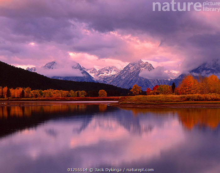 Willow, Cottonwood and Aspen trees on the banks of the Oxbow Bend, Snake River, at dawn, Teton mountain range in the background, Grand Teton National Park, Wyoming, USA  ,  ASPEN TREE,AUTUMN,CATALOGUE2,CLOUDS,cloudy,Cottonwood tree,Grand Teton National Park,MOUNTAINS,nature,Nobody,non urban scene,ORANGE,outdoors,Oxbow bend,PEACEFUL,REFLECTIONS,RESERVE,river,Riverbank,RIVERS,Scenic,SKY,Snake River,Teton Mountain Range,TREES,USA,WATER,Willow tree,woodland,wyoming,Weather,PLANTS,North America ,Rocky Mountains,  ,  Jack Dykinga