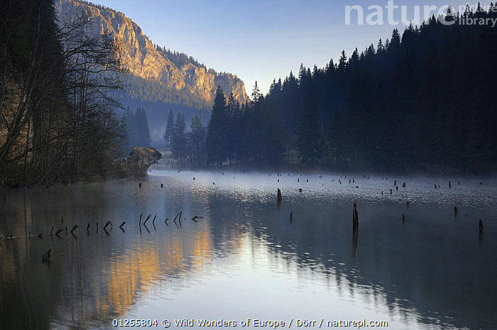 Red Lake and Suhardul Mara-massif (1,507m) with reflections and tree stumps sticking out of water, Cheile Bicazului-Hasmas National Park, Carpathian, Transsylvania, Romania, October 2008, CORNELIA D�RR,EASTERN EUROPE,EUROPE,FORESTS,LAKES,LANDSCAPES,MOUNTAINS,NP,REFLECTIONS,RESERVE,ROMANIA,WWE,National Park, Wild Wonders of Europe / Dörr