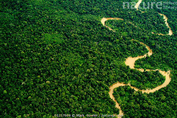 Aerial view of Amazon rainforest with river, Peru, AERIALS,amazon,CATALOGUE2,elevated view,green colour,LANDSCAPES,meandering,meanders,Nobody,outdoors,Peru,Peruvian Amazon,rainforest,river,RIVERS,SOUTH AMERICA,S Shape,TROPICAL RAINFOREST,winding,PERU, Mark  Bowler