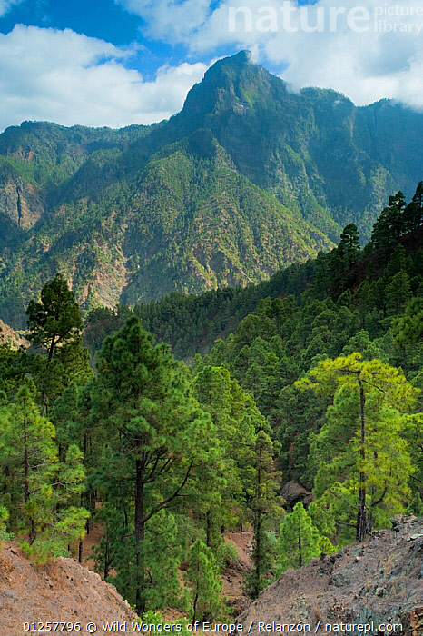 Berjenado peak viewed from the Caldera, Caldera de Taburiente National Park, La Palma, Canary Islands, Spain, March 2009, ATLANTIC ISLANDS,CANARIES,CLOUDS,EUROPE,FORESTS,I�AKI RELANZ�N,LANDSCAPES,MOUNTAINS,NP,RESERVE,SPAIN,TREES,VERTICAL,WWE,Weather,National Park,PLANTS, Wild Wonders of Europe / Relanzón