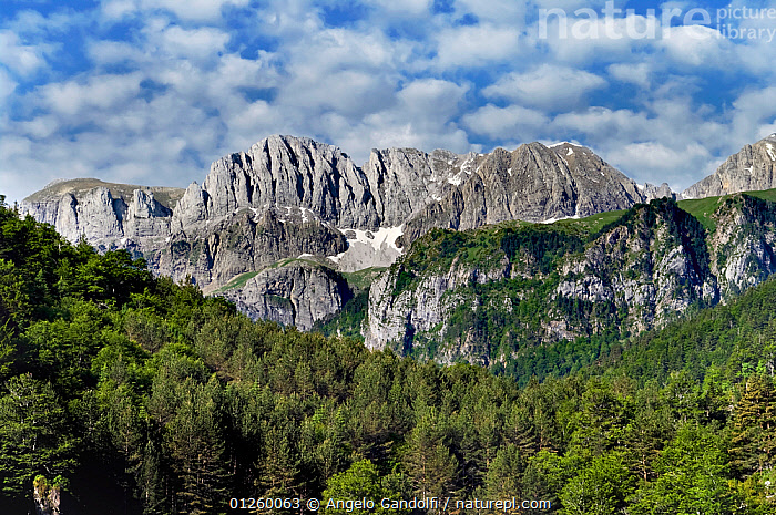 Pyrenees mountains at Selva de Oza, Parque Natural de los Valles Occidentales, Aragon, Spain., Aragon,CATALOGUE2,CONIFERS,elevated view,EUROPE,FORESTRY,FORESTS,LANDSCAPES,MOUNTAINS,nature,Nobody,outdoors,Parque Natural de los Valles Occidentales,pyrenees,RESERVE,Scenic,Selva de Oza,SPAIN,TREES,treetop,woodland,PLANTS, Angelo Gandolfi