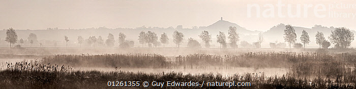 Hulk Moor at dawn with Glastonbury Tor in the distance, flooded peat workings on the Somerset Levels, Sharpham, Somerset, England  ,  ATMOSPHERIC,DAWN,EUROPE,LANDSCAPES,MIST,PANORAMIC,reeds,UK, United Kingdom  ,  Guy Edwardes