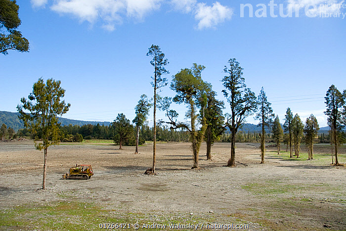 Bulldozer in newly cleared forest, West Coast, New Zealand, October 2008  ,  AUSTRALASIA,DEFORESTATION,LANDSCAPES,NEW ZEALAND,TREES,VEHICLES,PLANTS  ,  Andrew Walmsley