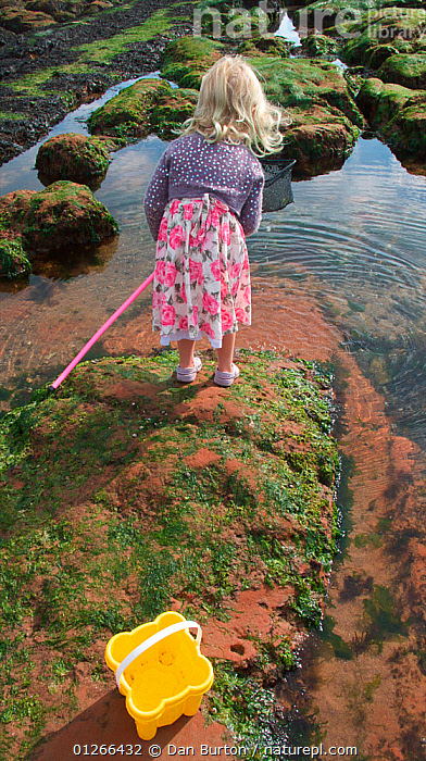 Young girl fishing in a tidepool on Exmouth Beach, Devon, UK, September 2009, Model released.  ,  CHILDREN,COASTS,EUROPE,EXPLORING,FISHING,LEARNING,LITTORAL,PEOPLE,ROCKPOOL,ROCKPOOLS,SEASHORE,SHRIMPING,TIDEPOOLS,UK,VERTICAL,ENGLAND,Intertidal, United Kingdom  ,  Dan Burton