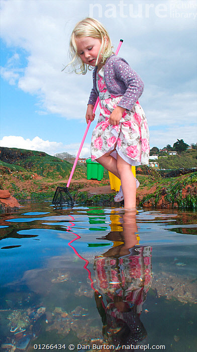 Young girl fishing in tidepool on Exmouth Beach, Devon, UK, September 2009, Model released.  ,  carefree,CHILDREN,COASTS,EUROPE,Exploring,FISHING,innocence,LIFESTYLE,LITTORAL,PEOPLE,REFLECTIONS,rockpool,rockpools,seashore,shrimping,TIDEPOOLS,UK,VERTICAL,youth,ENGLAND,Intertidal,United Kingdom,core collection xtwox  ,  Dan Burton