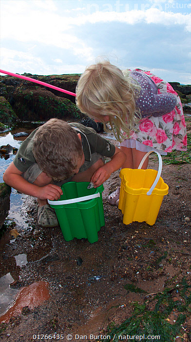 Children checking their bucket for animals caught in a tidepool on Exmouth Beach, Devon, UK, September 2009, Model released.  ,  BOY,CHILDREN,COASTS,EUROPE,EXPLORING,FISHING,GIRL,LEARNING,LITTORAL,PEOPLE,ROCKPOOL,ROCKPOOLS,SEASHORE,SHRIMPING,TIDEPOOLS,TWO,UK,VERTICAL,ENGLAND,Intertidal, United Kingdom  ,  Dan Burton
