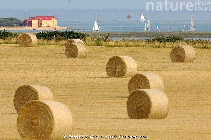 Round straw bales with tidal estuary, lifeboat station and pleasure boats in distance, Wells, Norfolk, UK, August  ,  BOATS,COASTS,EUROPE,FARMLAND,LANDSCAPES,SAILING BOATS,SUMMER,UK,ENGLAND, United Kingdom  ,  Gary K. Smith