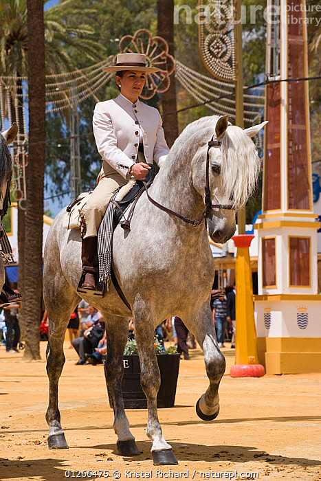 A traditionally dressed Andalusian lady parades with her Andalusian mare (Pura Raza Espanola) during the Feria Del Caballo (Horse Fair), Jerez De La Frontera, Andalucia, Spain, May 2009  ,  CITIES,COLOURFUL,COSTUME,EUROPE,GREY,HORSE,HORSES,PEOPLE,RIDING,SPAIN,TOURISM,TRADITIONAL,VERTICAL,WOMAN  ,  Kristel Richard