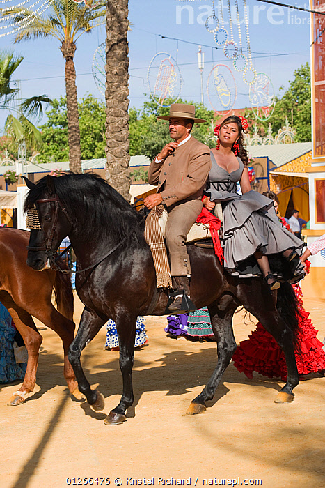 A traditionally dressed Andalusian couple riding their Andalusian stallion (Pura Raza Espanola) during the Feria Del Caballo (Horse Fair), Jerez De La Frontera, Andalucia, Spain, May 2009  ,  CITIES,COLOURFUL,COSTUME,EUROPE,HORSE,HORSES,MAN,PEOPLE,RIDING,SPAIN,TOURISM,TRADITIONAL,VERTICAL,WOMAN  ,  Kristel Richard