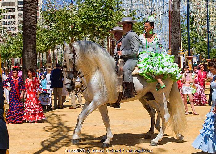 Two traditionally dressed Andalusian couples parade with their Andalusian horses (Pura Raza Espanola) during the Feria Del Caballo (Horse Fair), Jerez De La Frontera, Andalucia, Spain, May 2009  ,  CITIES,COLOURFUL,COSTUME,EUROPE,HORSE,HORSES,MAN,PEOPLE,RIDING,ROADS,SPAIN,TOURISM,TRADITIONAL,WOMAN  ,  Kristel Richard