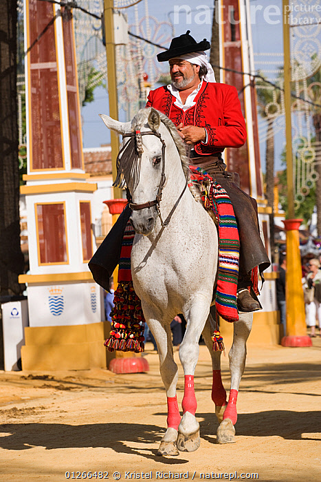 A traditionally dressed Andalusian gentleman parades with his Andalusian horse (Pura Raza Espanola) during the Feria Del Caballo (Horse Fair), Jerez De La Frontera, Andalucia, Spain, May 2009  ,  CITIES,COLOURFUL,COSTUME,EUROPE,HORSE,HORSES,MAN,PEOPLE,RIDING,SPAIN,TOURISM,TRADITIONAL,VERTICAL  ,  Kristel Richard