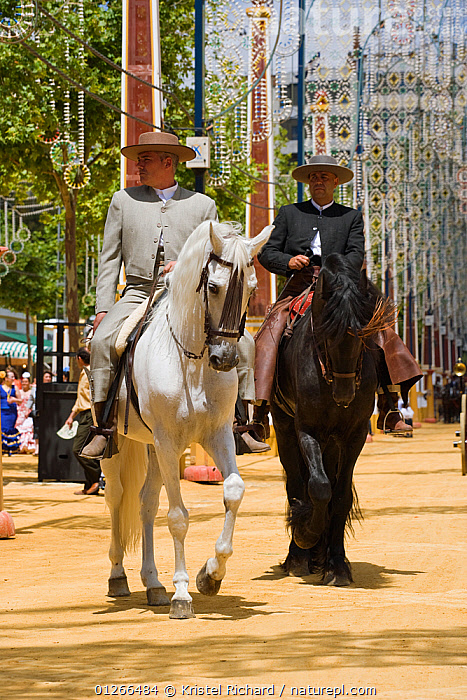 Two traditionally dressed Andalusian gentlemen parade with their Andalusian stallion (Pura Raza Espanola) during the Feria Del Caballo (Horse Fair), Jerez De La Frontera, Andalucia, Spain, May 2009  ,  CITIES,COLOURFUL,COSTUME,EUROPE,HORSE,HORSES,MAN,PEOPLE,RIDING,SPAIN,TOURISM,TRADITIONAL,VERTICAL  ,  Kristel Richard