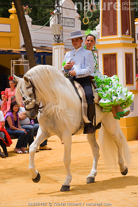 A traditionally dressed Andalusian couple parades with their white Andalusian stallion (Pura Raza Espanola) during the Feria Del Caballo (Horse Fair), Jerez De La Frontera, Andalucia, Spain, May 2009  ,  CITIES,COLOURFUL,COSTUME,EUROPE,GROUPS,HORSE,HORSES,MAN,PEOPLE,RIDING,SPAIN,TOURISM,TRADITIONAL,VERTICAL,WOMAN  ,  Kristel Richard