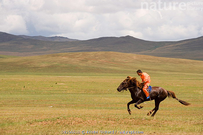 A young jockey mounted on a Mongolian horse, galloping in the horse race during the national Naadam festival, held from July 11 � 13; near Ulaanbaatar, Mongolia. 2007  ,  ACTION,ASIA,COMPETITION,GALLOPING,HORSE,HORSES,LANDSCAPES,MONGOLIA,PEOPLE,RACING,RIDING,RUNNING,SOLITARY  ,  Kristel Richard