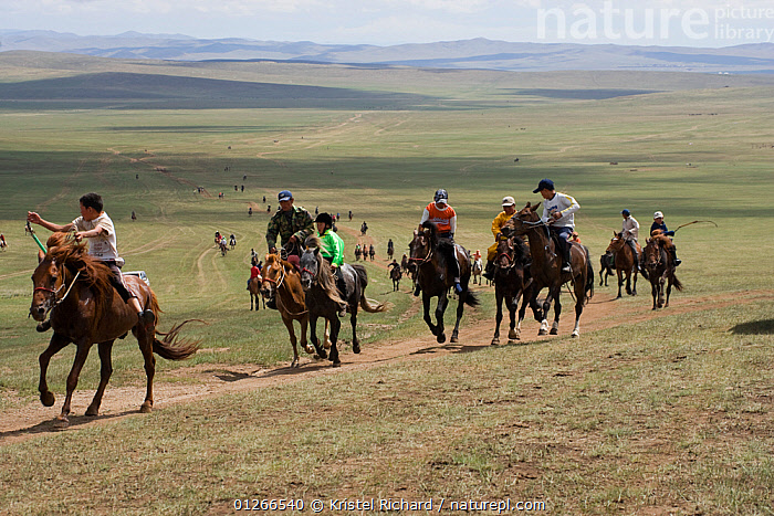 Young jockeys mounted on Mongolian horses, race during the training for the horse race of the national Naadam festival, held from July 11 � 13; near Ulaanbaatar, Mongolia. 2007  ,  ASIA,CHILDREN,COMPETITION,GALLOPING,HORSE,HORSES,LANDSCAPES,MONGOLIA,MOUNTAIN,PEOPLE,RACING,RIDING,RUNNING,SMALL,YOUNG  ,  Kristel Richard