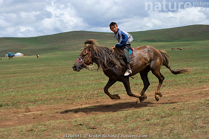 A young jockey mounted on a Mongolian horse, races in the horse race during the national Naadam festival, held from July 11 � 13; near Ulaanbaatar, Mongolia. 2007  ,  ASIA,CHILDREN,COMPETITION,GALLOPING,HORSE,HORSES,LANDSCAPES,MONGOLIA,MOUNTAIN,PEOPLE,RACING,RIDING,RUNNING,SMALL,YOUNG  ,  Kristel Richard