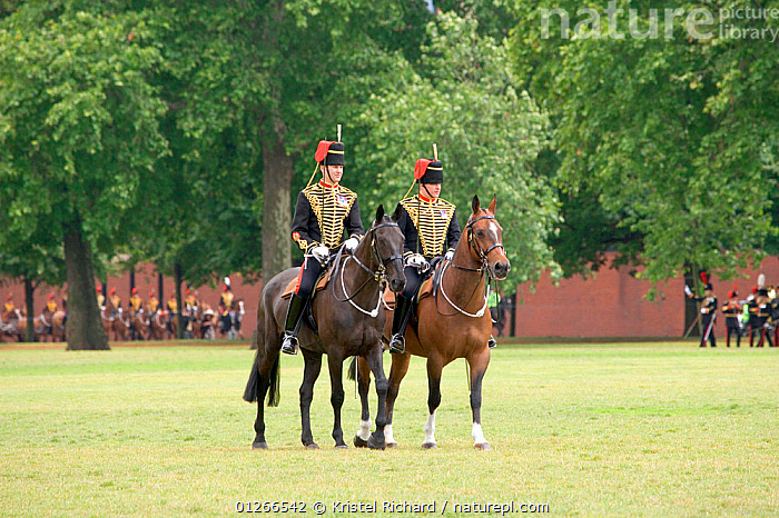 The King's Troops, Royal Horse Artillery, mounted on Irish Draft horses, celebrate their 60th anniversary in Hyde Park, June 2007  ,  ARMY,CEREMONY,CITIES,COSTUME,DOMESTIC HORSE ,EQUUS CABALLUS,EUROPE,HORSE,HORSES,PEOPLE,RIDING,ROYAL,SOLDIERS,TRADITIONAL,UK, United Kingdom  ,  Kristel Richard