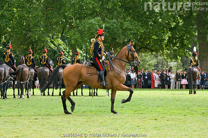 The King's Troops, Royal Horse Artillery, mounted on Irish Draft horses, celebrate their 60th anniversary in Hyde Park, June 2007, The horses pull a WWI canon used for the gun salutes, during official ceremonies.  ,  ARMY,CEREMONY,CITIES,COSTUME,CROWDS,DOMESTIC HORSE ,EUROPE,HORSES,PEOPLE,PROFILE,RIDING,SOLDIER,SOLDIERS,TRADITIONAL,UK, United Kingdom  ,  Kristel Richard