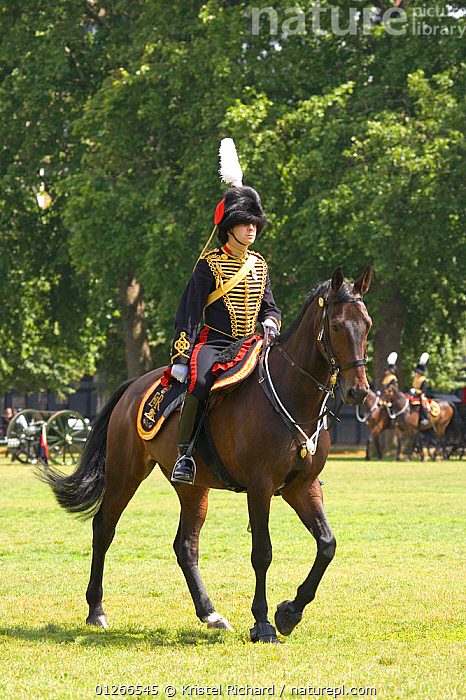 The King's Troops, Royal Horse Artillery, mounted on Irish Draft horses, celebrate their 60th anniversary in Hyde Park, June 2007  ,  ARMY,CEREMONY,CITIES,COSTUME,DOMESTIC HORSE ,EQUUS CABALLUS,EUROPE,HORSES,PEOPLE,RIDING,ROYAL,SOLDIER,SOLDIERS,TRADITIONAL,UK,VERTICAL, United Kingdom  ,  Kristel Richard