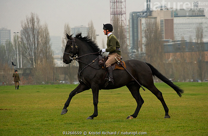 The King's Troops, Royal Horse Artillery, mounted on Irish Draft horses and dressed in training uniform, exercise in Wormwood Scrubs, London, UK. 2009  ,  ARMY,CANTERING,CITIES,DOMESTIC HORSE ,EQUUS CABALLUS,EUROPE,HORSE,HORSES,PEOPLE,PROFILE,RIDING,RUNNING,SOLDIERS,TRADITIONAL,UK, United Kingdom  ,  Kristel Richard