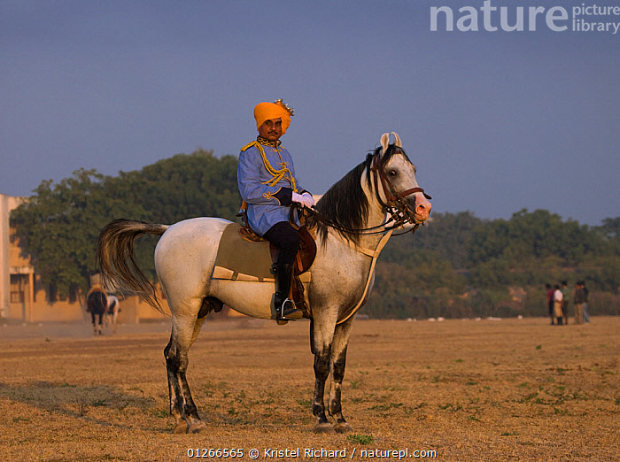 A policeman, dressed in ceremonial uniform and mounted on a Kathiawari stallion, stands at the Bhavnagar Police Station, Gujarat, India.  ,  ASIA,DOMESTIC,HORSES,INDIA,LANDSCAPES,POLICE,RIDING,Equines ,HORSES,PERISSODACTYLA,VERTEBRATES,MAMMALS  ,  Kristel Richard