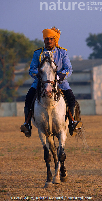 A policeman, dressed in ceremonial uniform and mounted on a Kathiawari stallion, walks at the Bhavnagar Police Station, Gujarat, India.  ,  ASIA,DOMESTIC HORSE,HORSES,INDIA,PEOPLE,POLICE,RIDING,VERTICAL,Equines ,HORSES,PERISSODACTYLA,VERTEBRATES,MAMMALS  ,  Kristel Richard