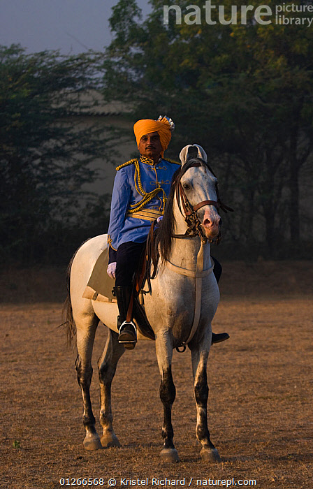 A policeman, dressed in ceremonial uniform and mounted on a Kathiawari stallion, stands at attention at the Bhavnagar Police Station, Gujarat, India.  ,  ASIA,HORSES,INDIA,PEOPLE,POLICE,RIDING,VERTICAL,Equines ,HORSES,PERISSODACTYLA,VERTEBRATES,MAMMALS  ,  Kristel Richard