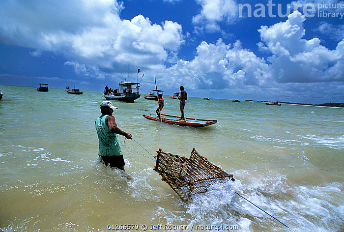 Fisherman pulls fish traps out from the shore to be set from boats, Natal, Brazil, Atlantic Ocean, January 2008  ,  ATLANTIC,BOATS,Brazil,COASTS,FISH,Fisherman,Fishermen,FISHING,hauling,LANDSCAPES,MARINE,PEOPLE,SOUTH AMERICA,sustainable,TRADITIONAL,SOUTH-AMERICA  ,  Jeff Rotman