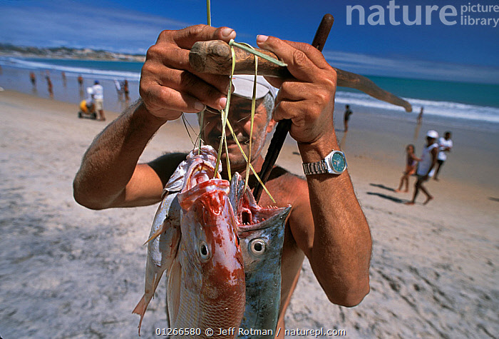 Fisherman displaying fish caught in gill net, Recife, Brazil, Atlantic Ocean, January 2008  ,  BEACHES,COASTS,FISH,Fisherman,FISHING,LANDSCAPES,PEOPLE,SOUTH AMERICA,SOUTH-AMERICA  ,  Jeff Rotman