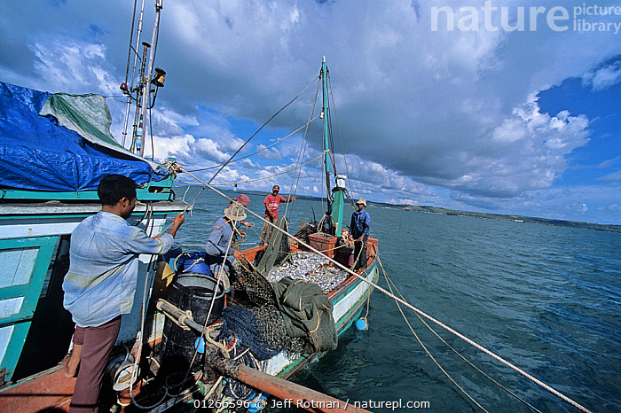 Sorting catch of juvenile fish and shrimp on fishing dragger boat, Sihanoukville, Cambodia / Kampuchea, June 2008  ,  ABOARD,ASIA,BOATS,CAMBODIA,CLOUDS,COASTS,COMMERCIAL,CRUSTACEANS,FISH,FISHERIES,FISHING,INDO PACIFIC,INVERTEBRATES,JUVENILE,LANDSCAPES,PEOPLE,SHRIMPS,SOUTH-EAST-ASIA,Weather  ,  Jeff Rotman