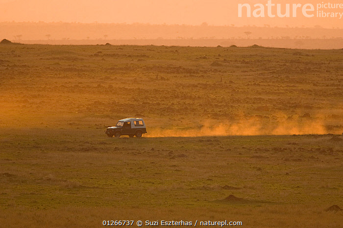 Mara Conservancy Patrol vehicle crossing the savanna at sunset, Masai Mara Conservancy, Kenya, September 2007  ,  DUST,EAST AFRICA,LANDSCAPES,RESERVE,SAVANNA,SPEED,SUNSET,VEHICLES,Grassland  ,  Suzi Eszterhas