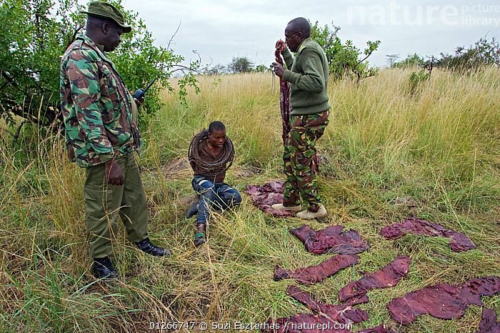 Mara Conservancy Rangers with apprehended poacher at poacher's camp (with wildebeest meat drying in sun) Serengeti National Park, Tanzania, August 2006  ,  ARTIODACTYLA,BUSHMEAT,CONSERVATION,EAST AFRICA,ILLEGAL,MAMMALS,NP,PEOPLE,POACHERS,POACHING,RANGERS,RESERVE,SAVANNA,THREE,WARDENS,National Park,Grassland,,Serengeti National Park, UNESCO World Heritage Site,  ,  Suzi Eszterhas
