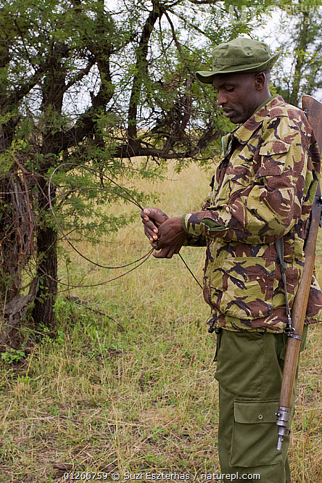 Mara Conservancy Rangers (Anti-poaching unit) removing snares from bushes, Masai Mara Conservancy, Kenya, August 2006  ,  CONSERVATION,EAST AFRICA,ILLEGAL,PEOPLE,POACHERS,POACHING,RANGERS,RESERVE,SNARES,VERTICAL,WARDENS  ,  Suzi Eszterhas