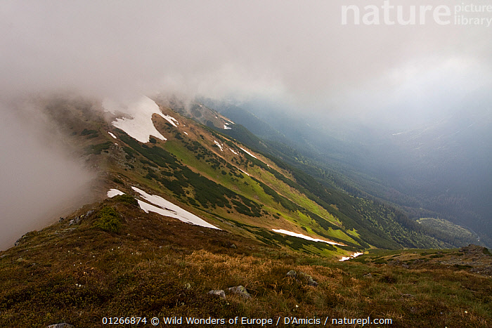 Low clouds with fresh grass on slopes of the Kouprova valley, Western Tatras, Carpathian Mountains, Slovakia, June 2009  ,  BRUNO D'AMICIS,CLOUDS,EASTERN EUROPE,EUROPE,LANDSCAPES,SLOVAKIA,WWE,Weather  ,  Wild Wonders of Europe / D'Amicis