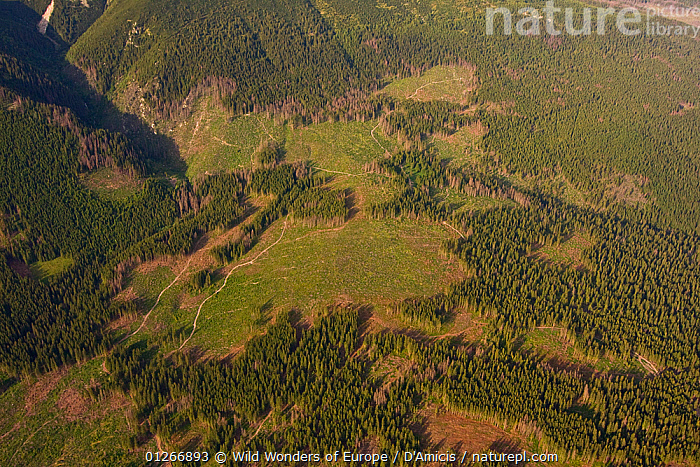Aerial view of deforested area in spruce forest on the foothills of Mount Kriv�n, High Tatras, Carpathian Mountains, Slovakia, June 2009  ,  AERIALS,BRUNO D'AMICIS,DEFORESTATION,EASTERN EUROPE,EUROPE,FORESTS,LANDSCAPES,SLOVAKIA,WWE  ,  Wild Wonders of Europe / D'Amicis