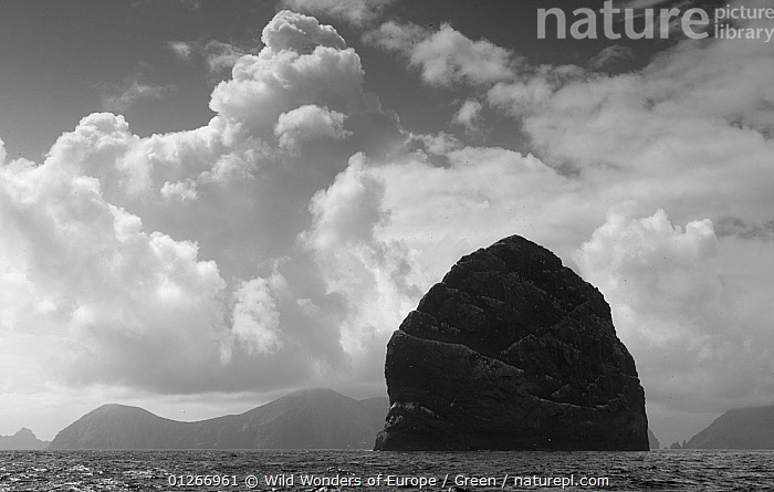 Northern gannet (Morus bassanus) colony, St Kilda, Scotland, May 2009  ,  bassana, BIRDS, CLOUDS, COASTS, Danny-Green, EUROPE, FLYING, GANNETS, GROUPS, ISLANDS, landscapescoasts, monochrome, ROCKS, SEABIRDS, UK, VERTEBRATES, WWE,Weather,United Kingdom , Outer Hebrides,SCOTLAND  ,  Wild Wonders of Europe / Green