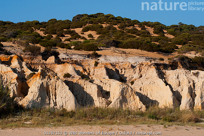 Fossilized dunes on the Atlantic coast of Do�ana National & Natural Park, Huelva Province, Andalusia, Spain, May 2009  ,  COASTS,EUROPE,FOSSILS,LANDSCAPES,NP,PETE OXFORD,RESERVE,SAND DUNES,SPAIN,WWE,National Park  ,  Wild Wonders of Europe / Oxford