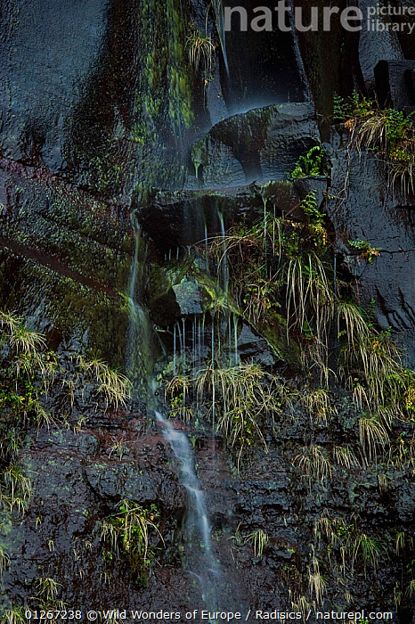 Waterfall over basalt stones, Paul de Serra mountains, Madeira, March 2009  ,  EUROPE,MILAN RADISICS,PORTUGAL,ROCKS,STREAMS,VERTICAL,WATER,WATERFALLS,WWE  ,  Wild Wonders of Europe / Radisics