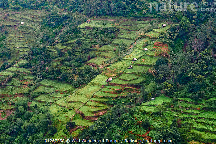 Strip cultivation in Madeira, March 2009  ,  AGRICULTURE,BUILDINGS,EUROPE,HIGH ANGLE SHOT,LANDSCAPES,MILAN RADISICS,PORTUGAL,WWE  ,  Wild Wonders of Europe / Radisics