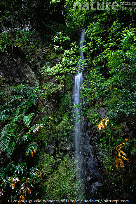 Waterfall, North Madeira, March 2009  ,  EUROPE,LANDSCAPES,MILAN RADISICS,PLANTS,PORTUGAL,RIVERS,VERTICAL,WATER,WATERFALLS,WWE  ,  Wild Wonders of Europe / Radisics