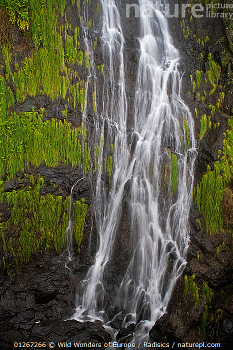 Waterfall near Sao Vicente, Madeira, March 2009  ,  EUROPE,LANDSCAPES,MILAN RADISICS,PLANTS,PORTUGAL,RIVERS,ROCKS,VERTICAL,WATER,WATERFALLS,WWE  ,  Wild Wonders of Europe / Radisics