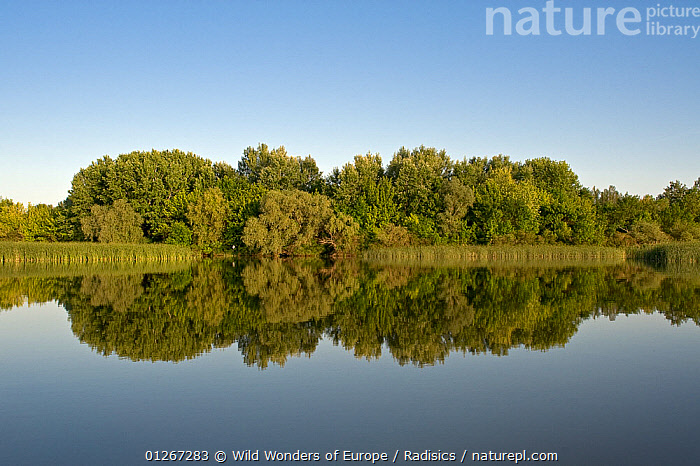 Lake Tisza with reflections in water, Hortobagy National Park, Hungary, May 2009  ,  EASTERN EUROPE,EUROPE,HUNGARY,LAKES,LANDSCAPES,MILAN RADISICS,NP,REED BEDS,REEDS,REFLECTIONS,RESERVE,TREES,WATER,WWE,National Park,PLANTS  ,  Wild Wonders of Europe / Radisics