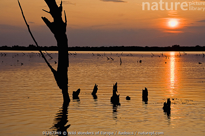 Sunset over a lake with tree stumps silhouetted in the water, Hortobagy National Park, Hungary, July 2009  ,  EASTERN EUROPE,EUROPE,HUNGARY,LAKES,MILAN RADISICS,NP,ORANGE,RESERVE,SILHOUETTES,SUN,WWE,National Park  ,  Wild Wonders of Europe / Radisics