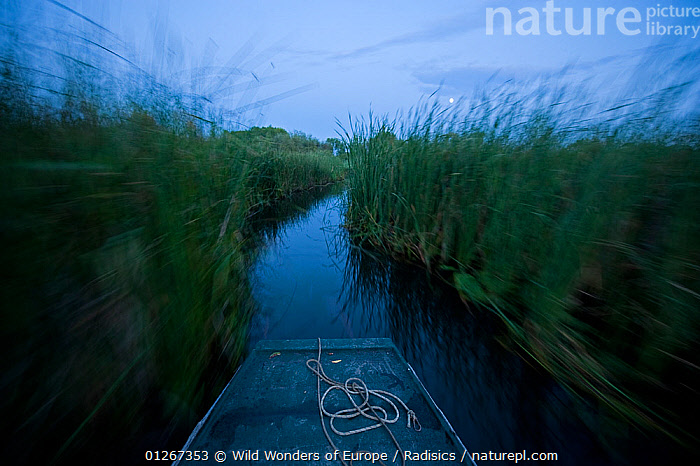 Wooden boat on a channel between reeds on lake Tisza at dusk, Hortobagy National Park, Hungary, July 2009  ,  ABOARD,BOATS,BOWS,EASTERN EUROPE,EUROPE,HUNGARY,LAKES,LANDSCAPES,MILAN RADISICS,MOVEMENT,NP,OPEN BOATS,REED BEDS,REEDS,RESERVE,RIVERS,WATER,WOODEN,WWE,National Park,BOAT-PARTS  ,  Wild Wonders of Europe / Radisics