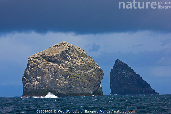 Stac Lee and Stac an Armin, home to Northern gannet (Morus bassanus) colonies, St. Kilda Archipielago, Outer Hebrides, Scotland, UK, June 2009, ATLANTIC, bassana, BIRDS, EUROPE, GANNETS, GROUPS, Juan-Carlos-Mu�oz, LANDSCAPES, ROCK-FORMATIONS, ROCKS, SEABIRDS, UK, VERTEBRATES, WWE,Marine,SCOTLAND,Geology,United Kingdom, Wild Wonders of Europe / Muñoz