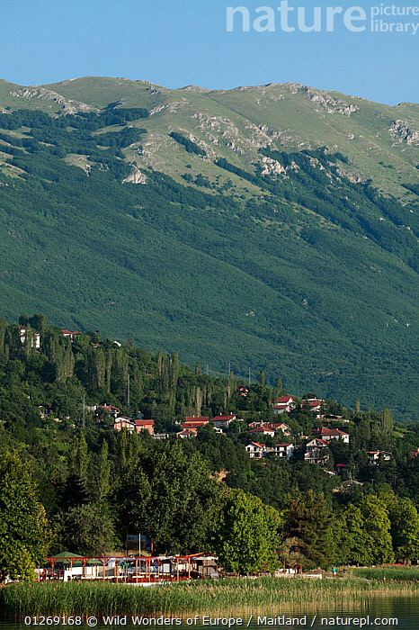 Elsani, a village on the shore of Lake Ohrid, Galicica National Park, Macedonia, June 2009  ,  BUILDINGS,DAVID MAITLAND,EUROPE,FORESTS,LAKES,LANDSCAPES,MACEDONIA,NP,RESERVE,VERTICAL,VILLAGES,WWE,National Park  ,  Wild Wonders of Europe / Maitland