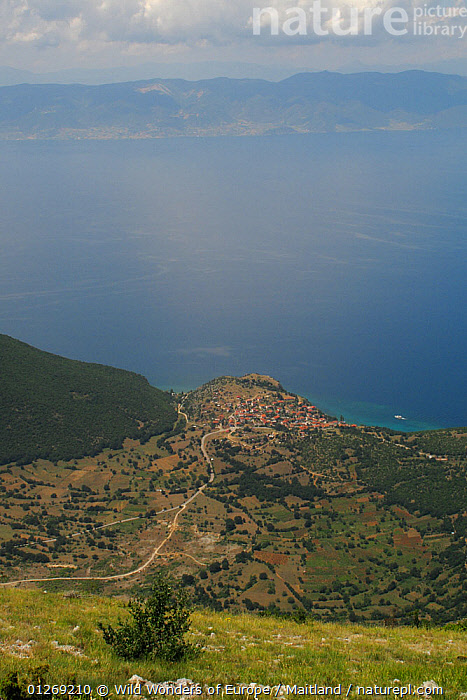 Trpejca village on the east shore of Lake Ohrid viewed from Baba, Galicica National Park, Macedonia, June 2009  ,  DAVID MAITLAND,EUROPE,LAKES,LANDSCAPES,MACEDONIA,NP,RESERVE,VERTICAL,VILLAGES,WWE,National Park  ,  Wild Wonders of Europe / Maitland