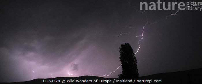 Thunderstorm over the Galicica mountain range with a Lombardy poplar (Populus nigra) silhouetted, Galicica National Park, Macedonia, Macedonia, June 2009  ,  DAVID MAITLAND,DICOTYLEDONS,EUROPE,LIGHTING,MACEDONIA,NP,PLANTS,RESERVE,SALICACEAE,SILHOUETTES,STORMS,TREES,WWE,National Park,Weather  ,  Wild Wonders of Europe / Maitland