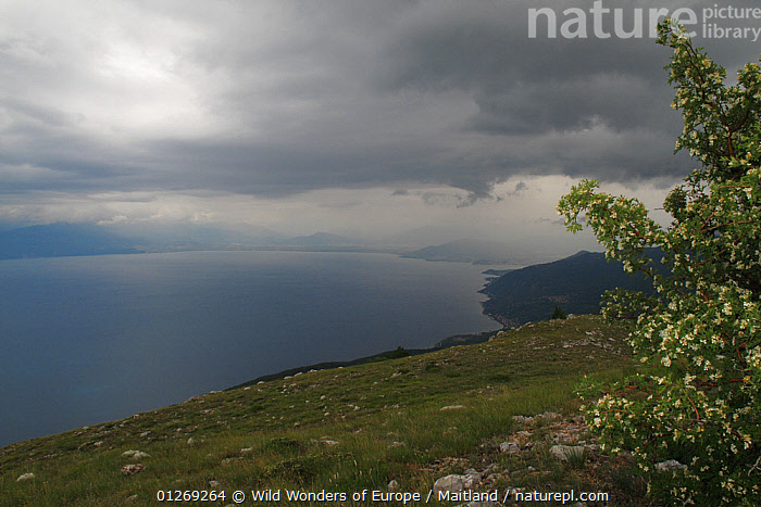 View of Lake Ohrid from Mount Baba, Galicica National Park, Macedonia, June 2009  ,  CLOUDS,DAVID MAITLAND,EUROPE,LAKES,LANDSCAPES,MACEDONIA,NP,RESERVE,WWE,Weather,National Park  ,  Wild Wonders of Europe / Maitland