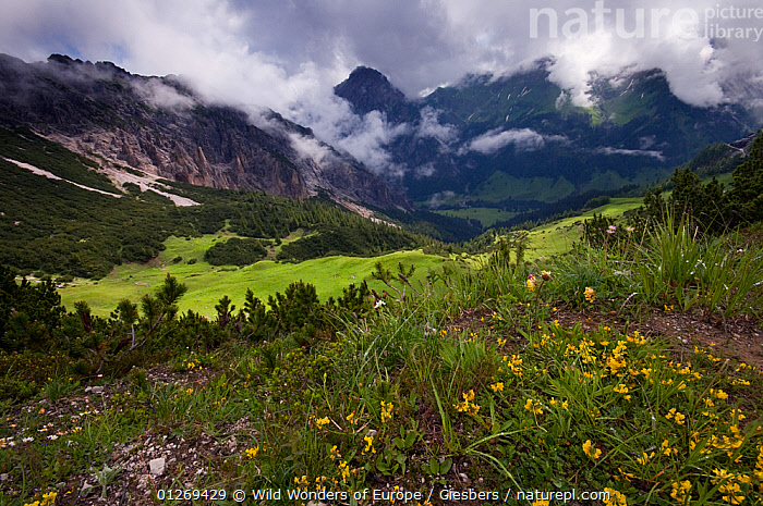 Clouds surrounding mountains with Horseshoe vetch (Hippocrepis comosa) flowering in the foreground, Liechtenstein, June 2009  ,  ALPINE,ALPS,CLOUDS,DICOTYLEDONS,EDWIN GIESBERS,EUROPE,FABACEAE,LANDSCAPES,LEGUME,LIECHTENSTEIN,MOUNTAINS,PLANTS,WWE,Weather  ,  Wild Wonders of Europe / Giesbers